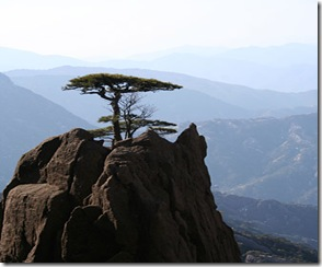 mountain_tree